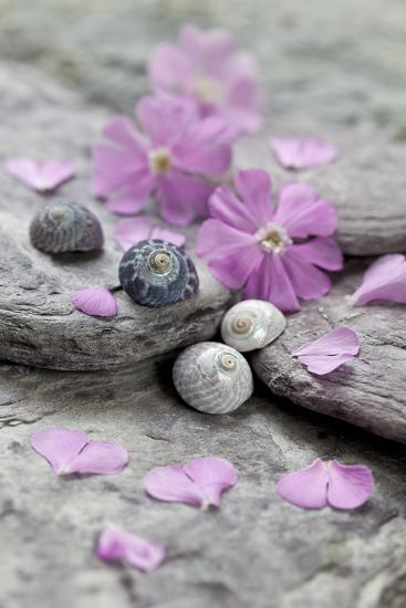 Pink Blossoms, Stone, Snail Shell-Andrea Haase-Photographic Print