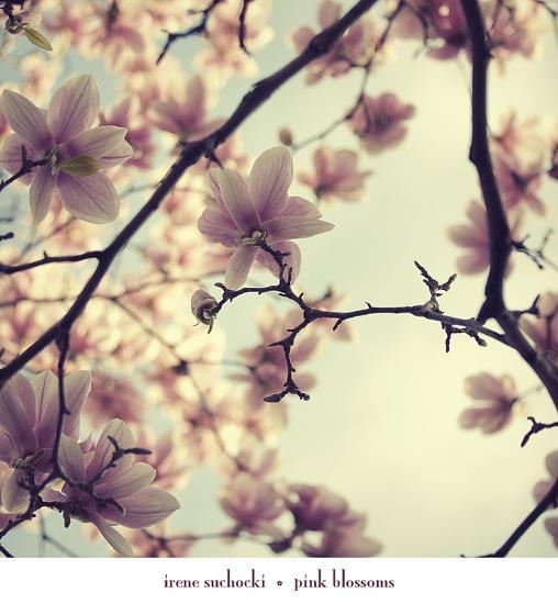 Pink Blossoms-Irene Suchocki-Art Print