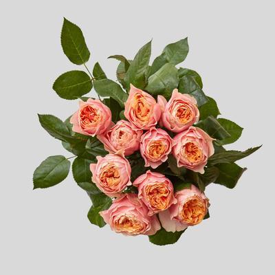 https://imgc.artprintimages.com/img/print/pink-bouquet-of-roses_u-l-q1bzjvu0.jpg?p=0