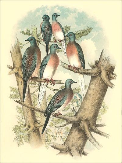 Pink-Breasted Doves-Found Image Press-Art Print