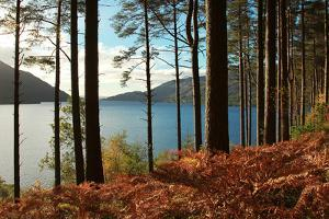 Trees and Fern during Autumn in Front of Loch Lomond, Scotland, Uk. by pink candy