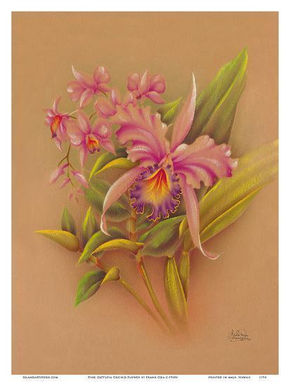 Pink Cattleya Orchid Flower - Hale Pua Studio Hawaii-Frank Oda-Art Print