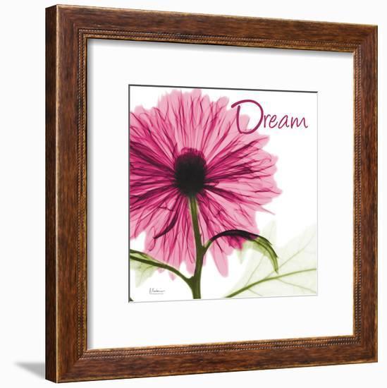 Pink Chrysanthemum Dream-Albert Koetsier-Framed Art Print