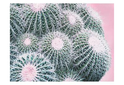https://imgc.artprintimages.com/img/print/pink-crush-iii_u-l-f93rxe0.jpg?p=0