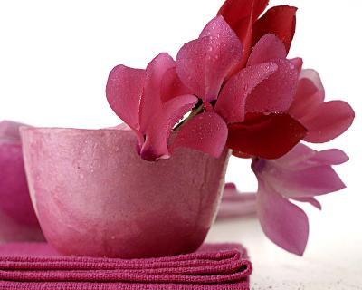 Pink Cyclamens--Art Print