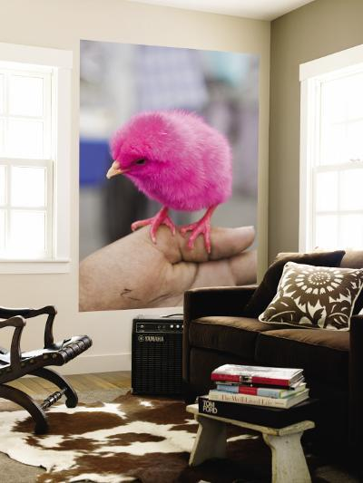 Pink Dyed Chick for Sale at Friday Market-Craig Pershouse-Wall Mural