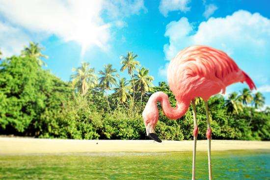 Pink Flamingo in the Water on A Tropical Scenery-Polarpx-Photographic Print