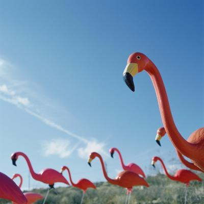 Pink flamingo lawn ornaments--Photographic Print