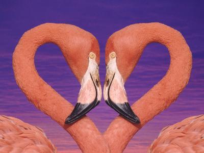 Pink Flamingos in Love-DLILLC-Photographic Print