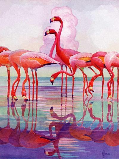 """Pink Flamingos,""January 29, 1938-Francis Lee Jaques-Giclee Print"