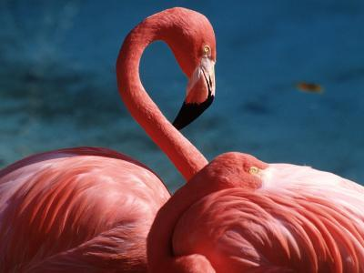 Pink Flamingos-Michele Burgess-Photographic Print