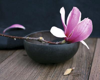 Pink Flower-Amelie Vuillon-Art Print
