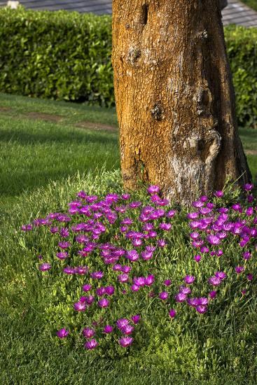 Pink flowers around a tree-Adriano Bacchella-Photo