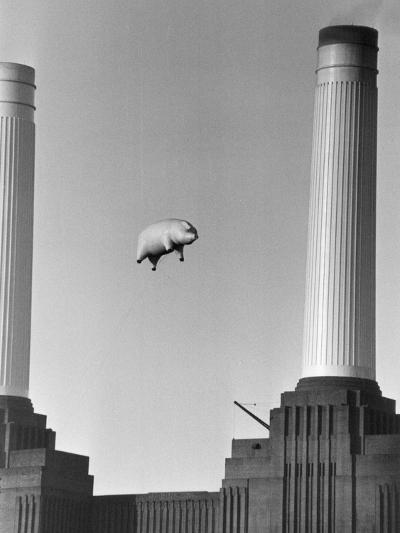 Pink Floyd's Pig-Keystone-Photographic Print