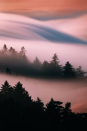 Pink Fog, Sunset Light and Flowing Fog from Pacific Ocean, San Francisco-Vincent James-Photographic Print