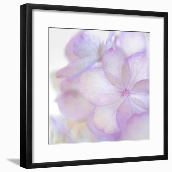 Pink Hydrangea II-Kathy Mahan-Framed Photographic Print