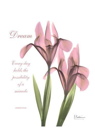 Pink Iris, Dream-Albert Koetsier-Art Print