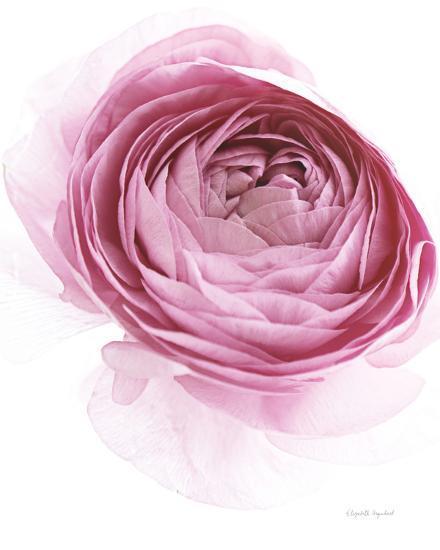 Pink Lady IV-Elizabeth Urquhart-Photo