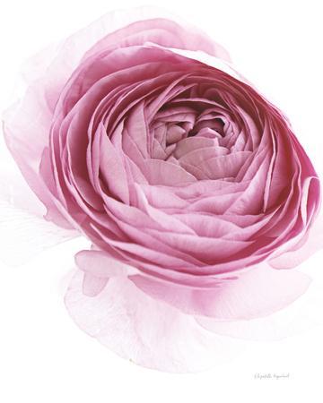 https://imgc.artprintimages.com/img/print/pink-lady-iv_u-l-q1awmjf0.jpg?p=0