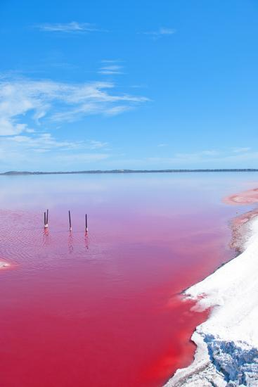 Pink Lake, Western Australia. this Lake Turns Pink in Summer Cause of an Algae with Red Pigments. T-Konrad Mostert-Photographic Print