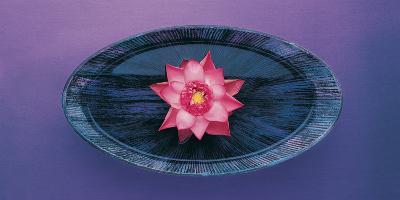 Pink Lotus Flower in Bowl, India, Asia- Dinodia Photos-Photographic Print