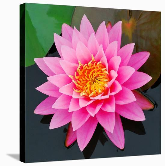 Pink Lotus Flower In Pond Stretched Canvas Print By Artcom