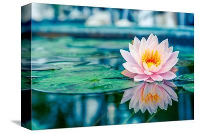 Pink Lotus with Reflection--Stretched Canvas Print