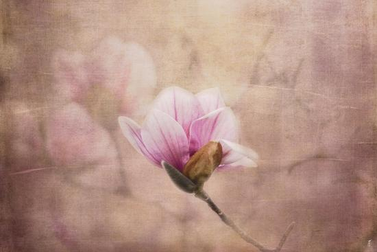 Pink Magnolia 2-Jai Johnson-Giclee Print