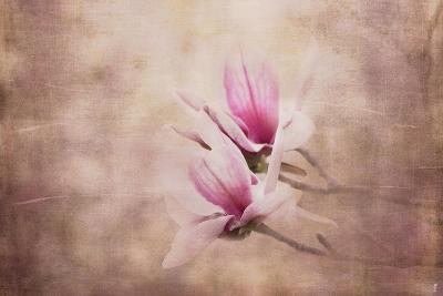 Pink Magnolia 3-Jai Johnson-Giclee Print
