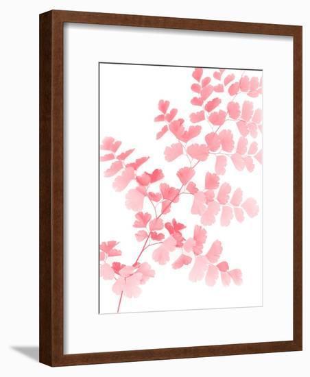 Pink Maidenhair-Lexie Greer-Framed Photographic Print