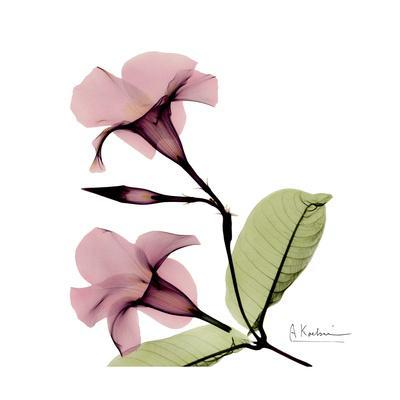 https://imgc.artprintimages.com/img/print/pink-mandelila_u-l-pyjxr30.jpg?p=0