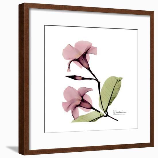 Pink Mandelila-Albert Koetsier-Framed Premium Giclee Print