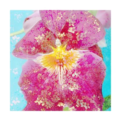 Pink Miltonia Orchid-Alaya Gadeh-Art Print