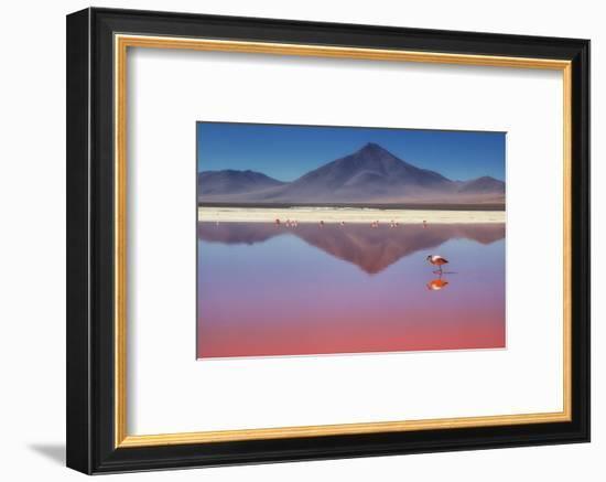 Pink Morning-Margarita Chernilova-Framed Photographic Print