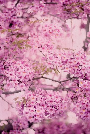 Pink On Pink IV-Elizabeth Urquhart-Photo