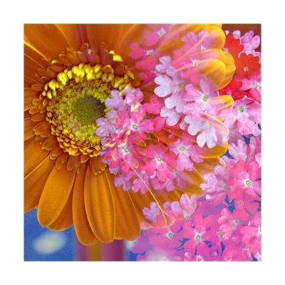 Pink Orange Gerger Daisy Square-Alaya Gadeh-Art Print
