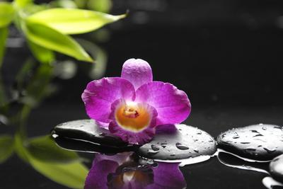 https://imgc.artprintimages.com/img/print/pink-orchid-and-stones-with-bamboo-green-leaf_u-l-q105ccx0.jpg?p=0