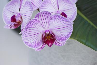 https://imgc.artprintimages.com/img/print/pink-orchid-blooms_u-l-q12ytrb0.jpg?p=0
