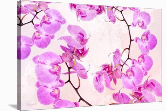 Pink Orchid II--Stretched Canvas Print