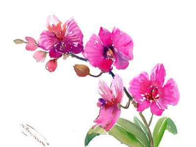 https://imgc.artprintimages.com/img/print/pink-orchids-1_u-l-f98tmq0.jpg?p=0