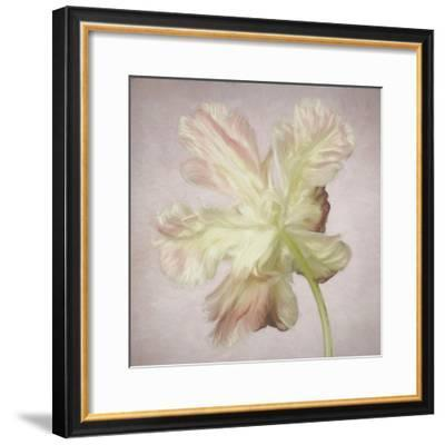 Pink Parrot Tulip Painting II-Cora Niele-Framed Giclee Print