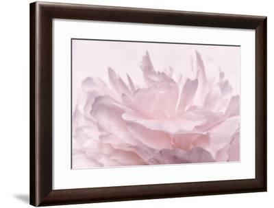 Pink Peony Petals III-Cora Niele-Framed Photographic Print