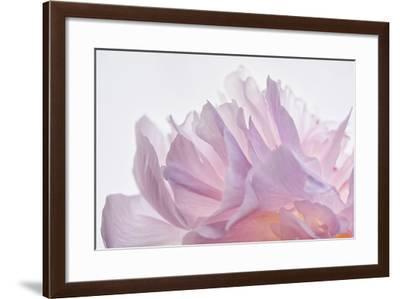 Pink Peony Petals VI-Cora Niele-Framed Photographic Print