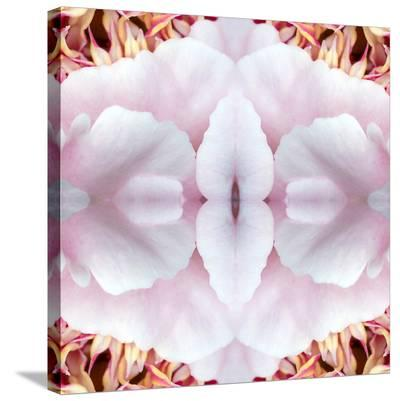 Pink Peony-Rose Anne Colavito-Stretched Canvas Print