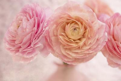 Pink Persian Buttercup Bouquet-Cora Niele-Photographic Print