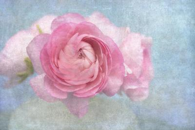 Pink Persian Buttercup Still Life-Cora Niele-Photographic Print