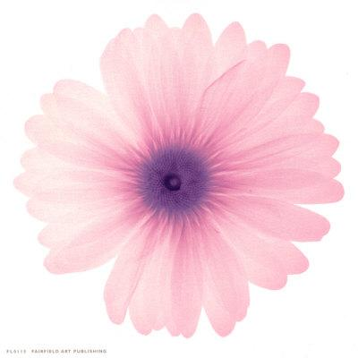 https://imgc.artprintimages.com/img/print/pink-petals_u-l-envvg0.jpg?p=0