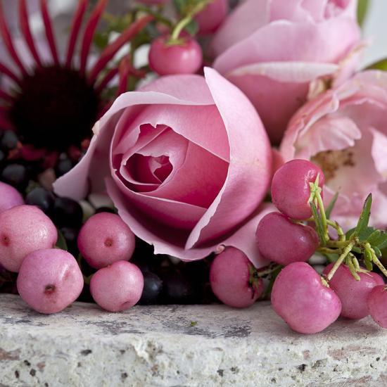 Pink Rose - Square-Lebens Art-Art Print