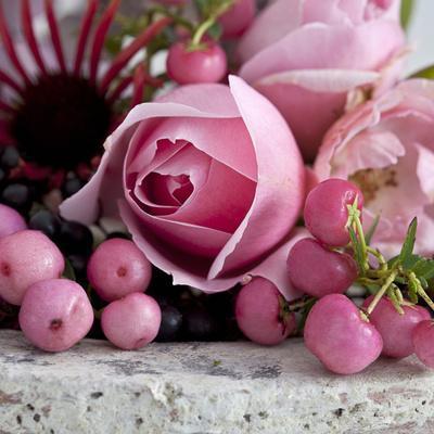 https://imgc.artprintimages.com/img/print/pink-rose-square_u-l-f8y6n20.jpg?p=0
