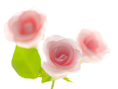 Pink rose-Kiyoshi Miyagawa-Photographic Print